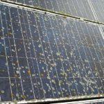 Solar/Photovoltaik Reinigung 15