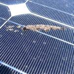 Solar/Photovoltaik Reinigung 34
